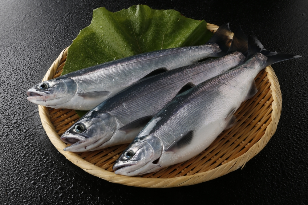 支笏湖漁協